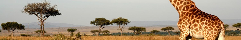 Жаркая Африка